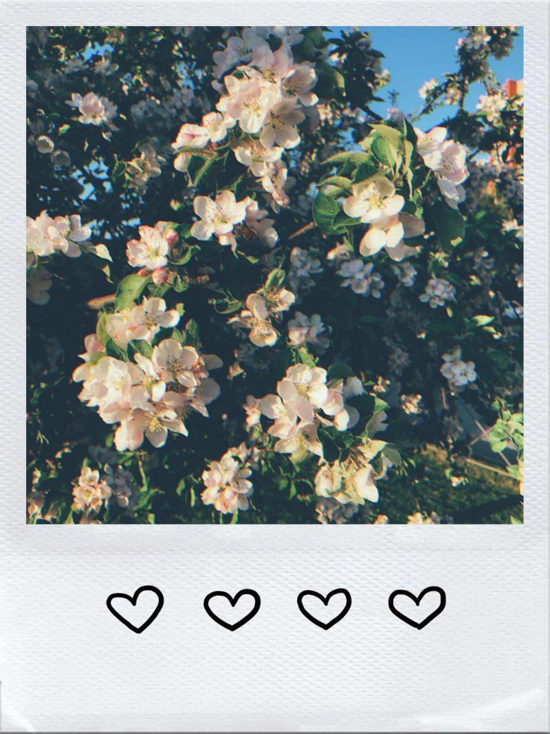 Рамки для фото в инстаграм