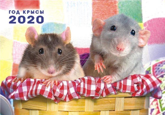 год крысы 2020 милые картинки