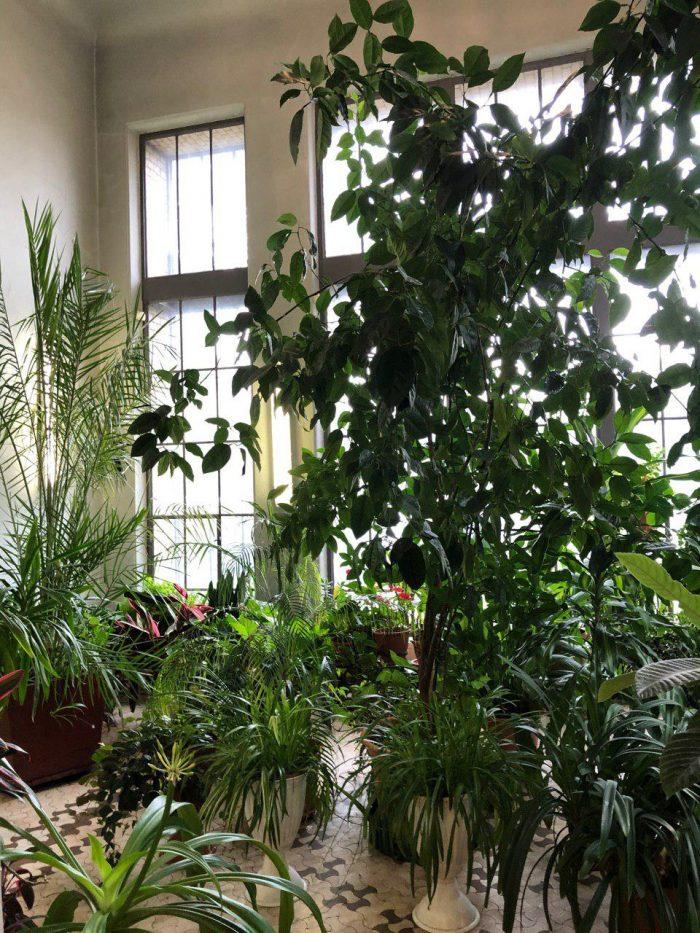зимний сад в особняке кшесинской