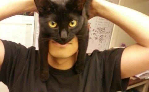 Маска шапка из кота в инстаграме