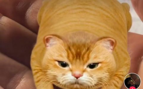 Фильтр с лежащим рыжим котом