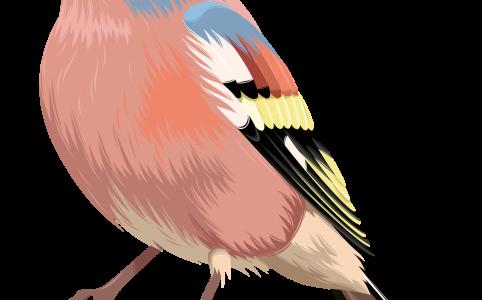 Маски с птицами в инстаграме