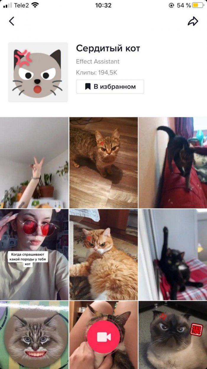 Маска Сердитый кот в ТикТоке
