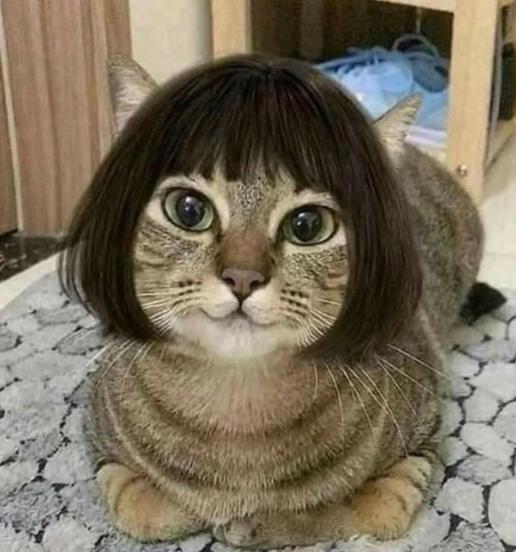 Маска Парик для кота