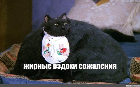 Эффект с толстым котом в ТикТоке