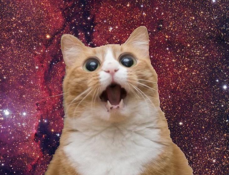 Маска с большой головой и крошечным лицом кота в ТикТоке