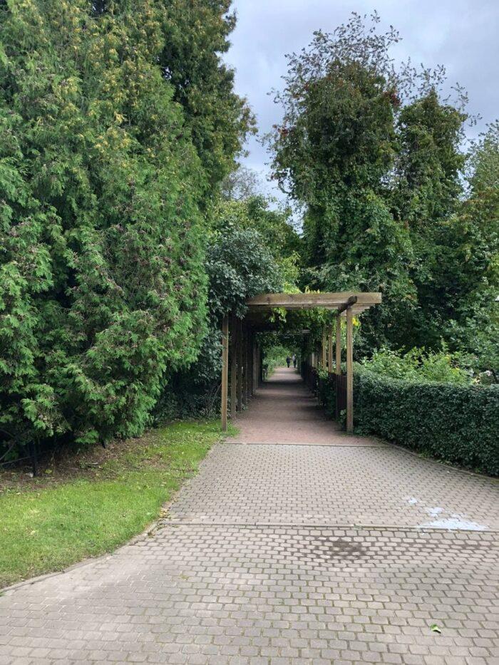 Японский сад в Ботаническом саду Петра Великого в Санкт-Петербурге капа черепашка