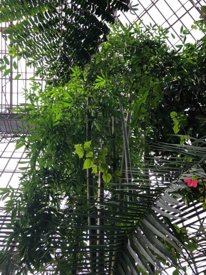Большая пальмовая оранжерея в Ботаническом саду Санкт-Петербурга