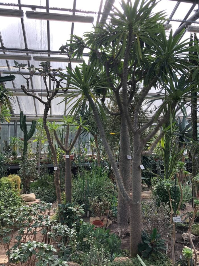 Кактусовая оранжерея в Ботаническом саду в Санкт-Петербурге