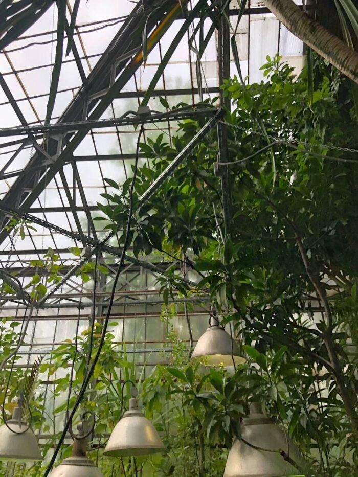 Мангровая оранжерея в Ботаническом саду в Санкт-Петербурге