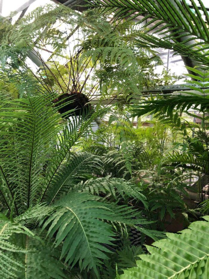 Тропическая оранжерея в Ботаническом саду в Санкт-Петербурге